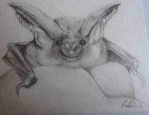 Lia's-Brown-eared-bat