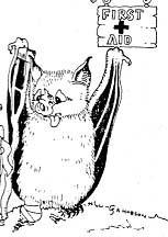 bat on crutches