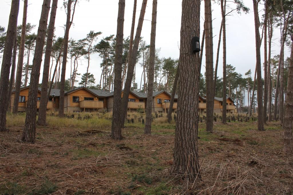 Bespoke accommodation for bat and people in close proximity. Photo Bob Cornes