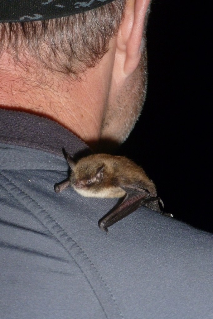 What the welll dressed Bat Group Chair is wearing this year. Photo Jude Hirstwood