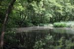 crop black pond.jpg